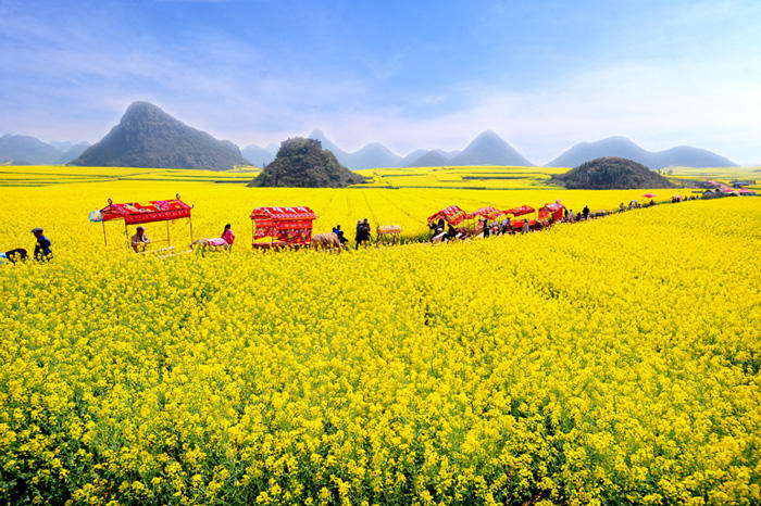 The best travel program in February has been good for you to see the rape flowers in Luoping - kikbb